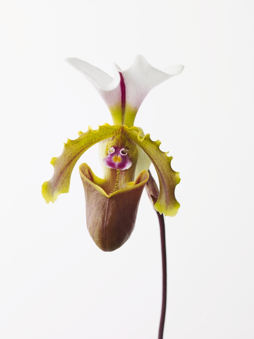 20071219_orchid_039